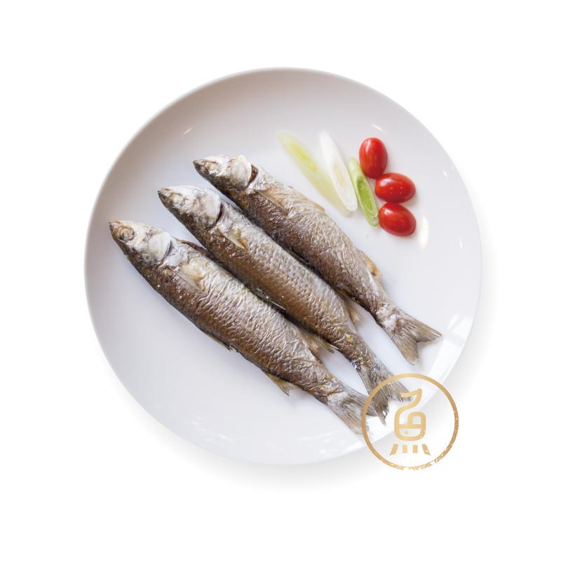 生態豆仔魚